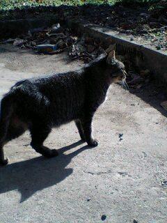 ohstep-2007-11-19T11_50_12-1.jpg